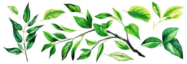 Insieme di rami verde brillante con foglie