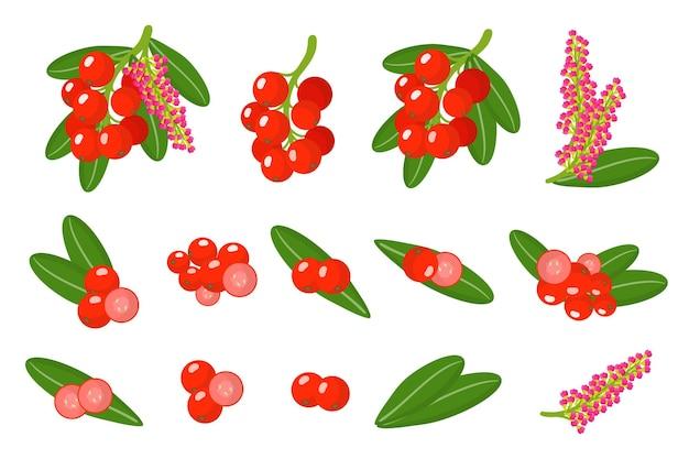 Set di buffaloberry frutta esotica isolato su bianco