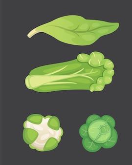 Set cavolo e lattuga. broccoli verdi vegetali, cavolo rapa, altri cavoli diversi.