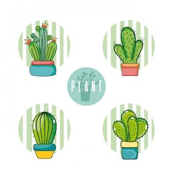 Set di cartoni animati di cactus