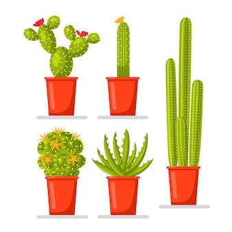 Insieme di piante di cactus in vaso