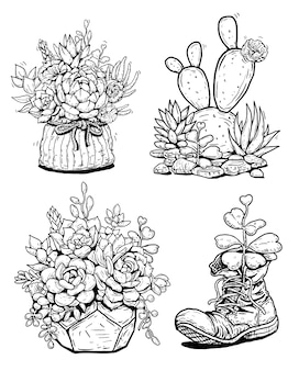 Set cactus succulent line illustration