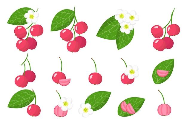 Set di frutta esotica capulin isolato su bianco