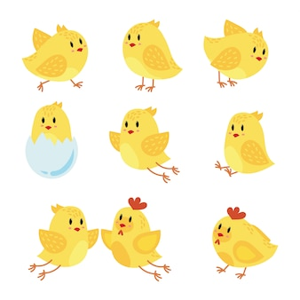 Un set di pollo dei cartoni animati. raccolta di pulcini gialli felici. piccoli uccelli.