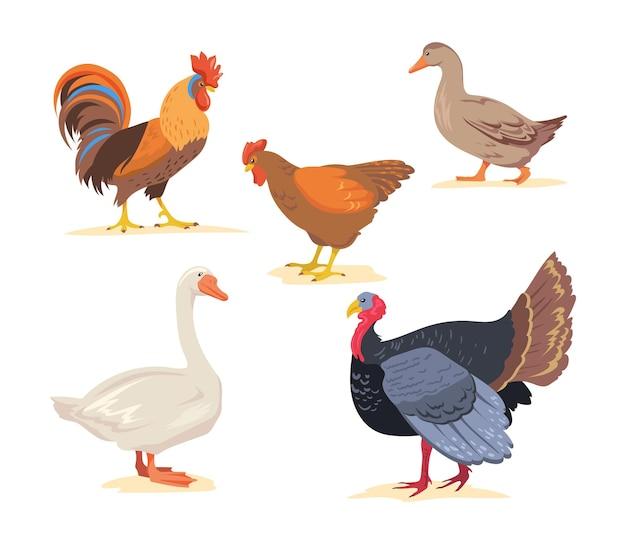 Set di fattoria dei cartoni animati, illustrazione piana di uccelli di pollame.