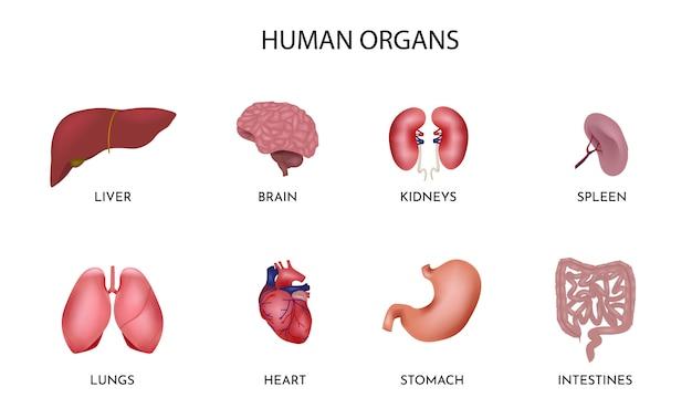 Insieme di organi umani dei cartoni animati