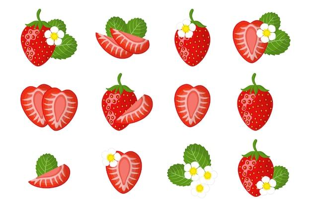 Serie di illustrazioni di cartoni animati con intero, metà, fetta tagliata fragola frutta esotica, fiori e foglie isolati su priorità bassa bianca