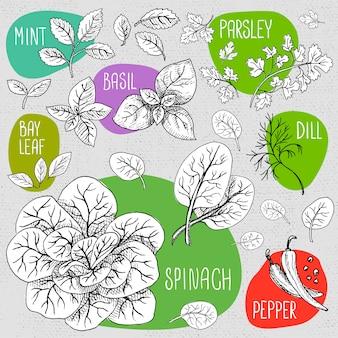 Set di gesso disegnato su un alimento di lavagna.