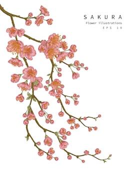 Set di fiori di ciliegio fiore isolato su bianco
