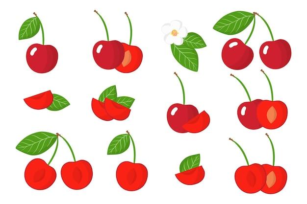 Set di frutta esotica ciliegia isolato su bianco