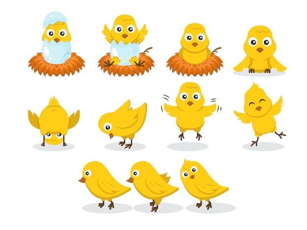 Set di pulcini baby pollo carattere illustrazione