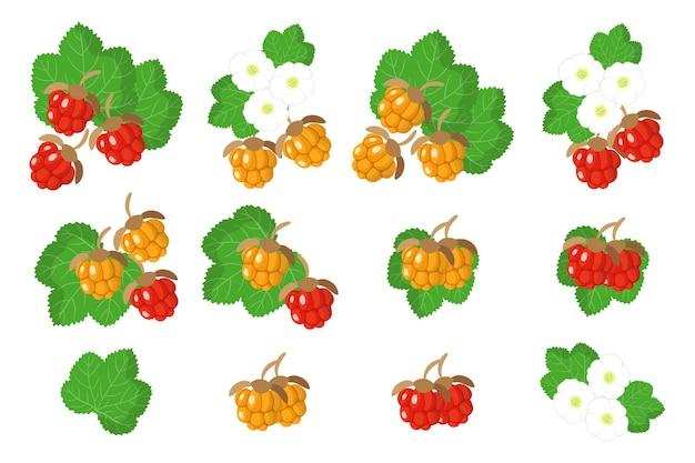 Set di frutti esotici cloudberry isolato su bianco