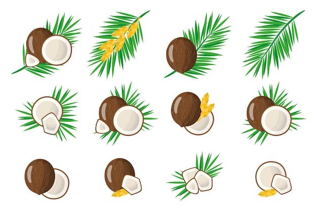 Set di frutta esotica di cocco isolato su bianco