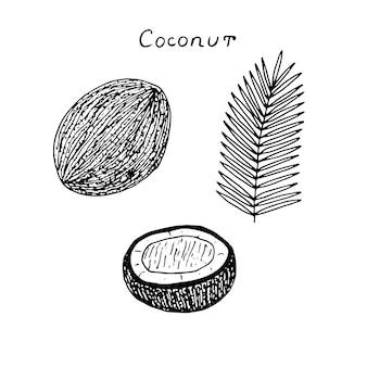 Set di cocco, intero, metà e foglia, illustrazione vettoriale, schizzo