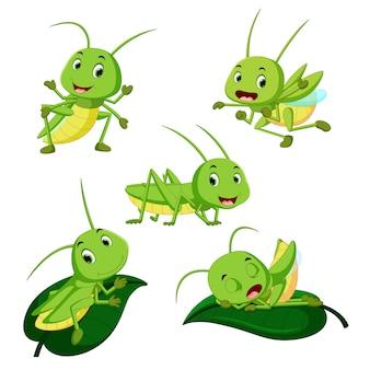 Set cartoon raccolta cavalletta