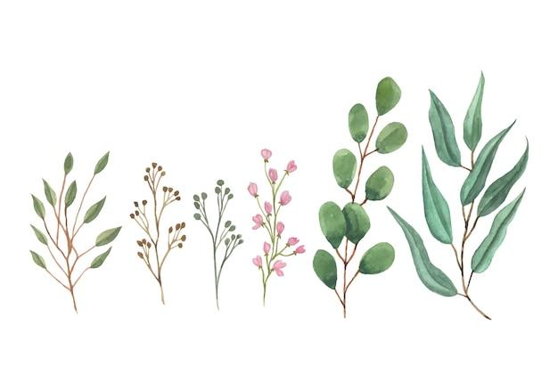 Impostare la raccolta di acquerelli di foglie e fiori selvatici