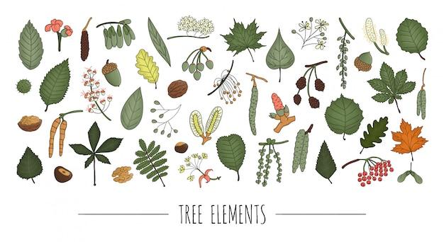 Set di elementi colorati albero isolato su sfondo bianco. confezione colorata di betulla, acero, quercia, nocciola, tiglio, ontano, pioppo tremulo, olmo, pioppo, salice, noce, foglie di frassino. stile cartone animato