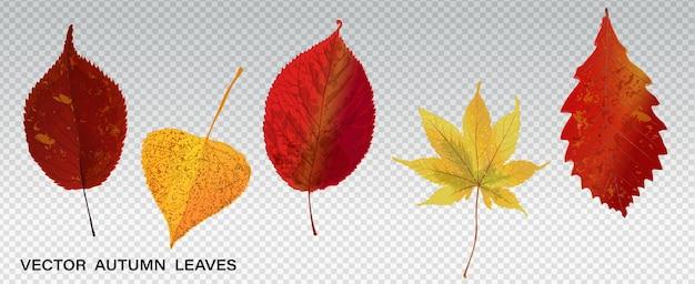 Set di foglie autunnali colorate. illustrazione vettoriale. raccolta di varie foglie autunnali, elementi meravigliosi per il tuo design