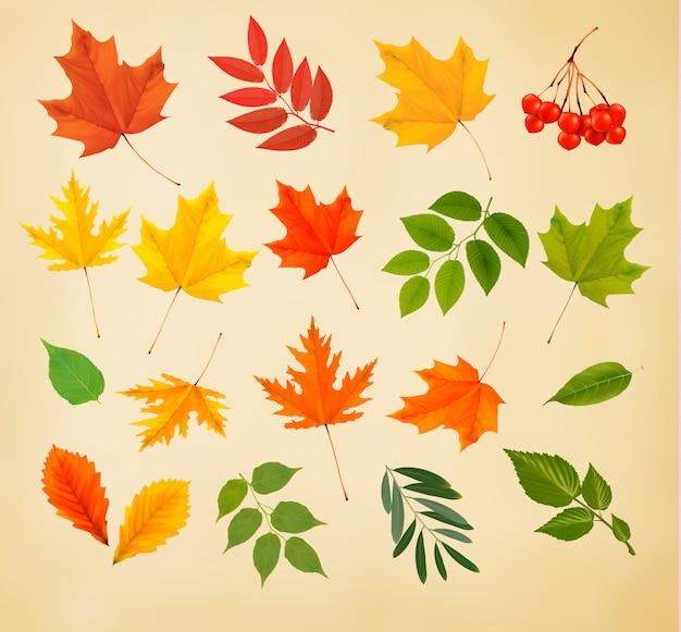 Set di foglie colorate d'autunnali. illustrazione vettoriale