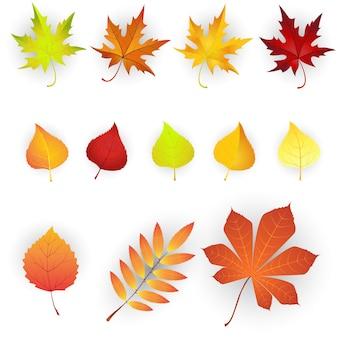 Set di foglie autunnali colorate.