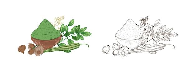 Serie di disegni colorati e monocromatici della pianta di moringa oleifera, baccelli vegetali e polvere nella ciotola. prodotto superfood, integratore alimentare disegnato a mano su sfondo bianco