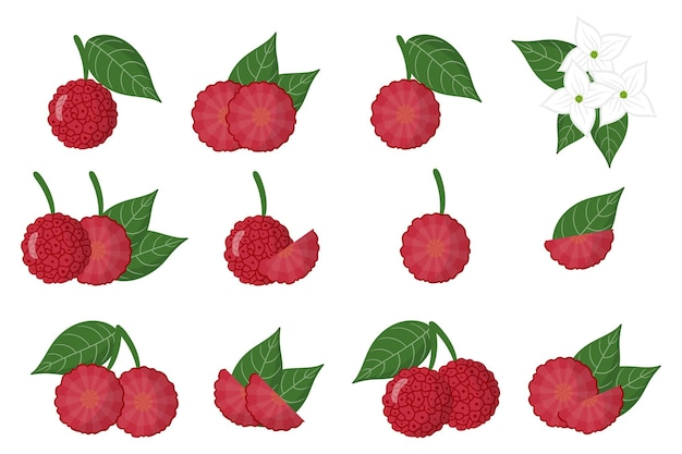 Set di cornus capitata frutti esotici isolati su bianco