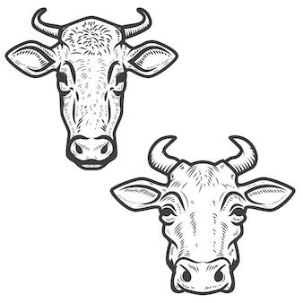 Insieme delle teste della mucca su bianco