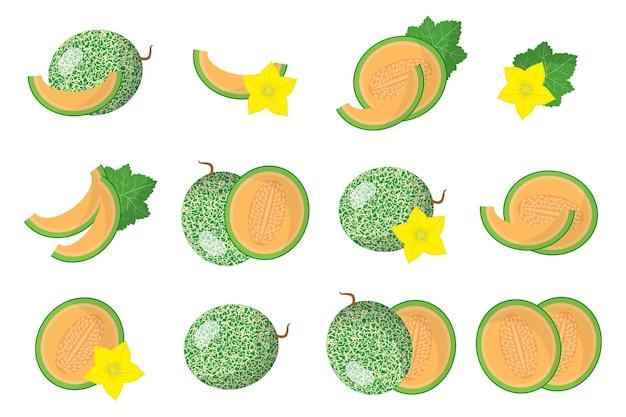 Set di cucumis melo frutti esotici isolati su bianco