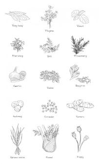 Set di erbe aromatiche. finocchio, cipolla verde, curcuma, coriandolo, noce moscata, zafferano, badiano, rosmarino, aneto, prezzemolo, basilico.