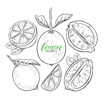 Set di limoni carini. illustrazione disegnata a mano