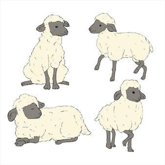 Set di pecore carine con disegno a mano o stile schizzo su sfondo bianco