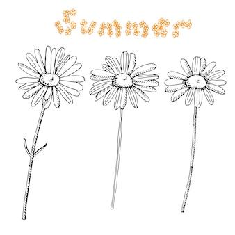 Set di margherite, illustrazione vettoriale, schizzo disegnato a mano