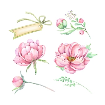 Set di illustrazioni decorative di fiori rosa peonie boccioli e banner per il testo acquerello vettoriale