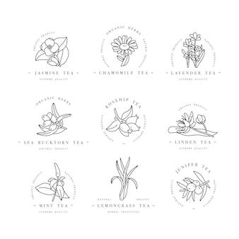 Set design modelli colorati logo ed emblemi - erbe e tè biologici