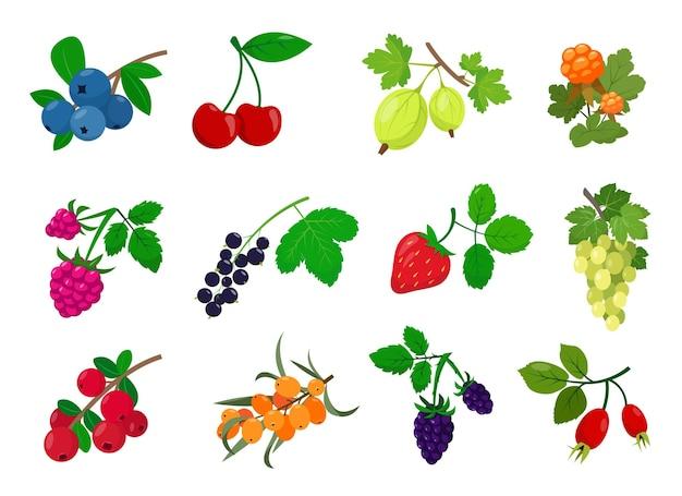 Set di bacche diverse con foglie raccolta vettore cartone animato o icone piatte