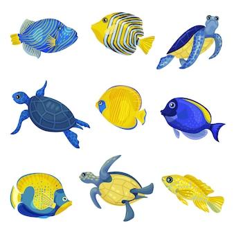 Set di diversi pesci esotici e tartarughe.