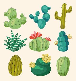 Set di diversi fiori di cactus domestici isolati su sfondo bianco