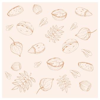 Set di foglie di noci diverse, disegnate a mano