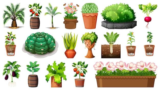 Insieme di diverse piante in vasi isolati su sfondo bianco