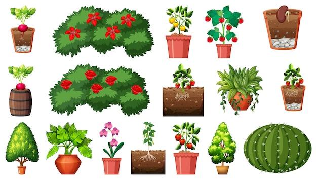 Set di piante diverse in vaso isolato su sfondo bianco