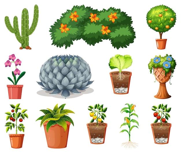 Insieme di piante diverse in vaso isolato su sfondo bianco