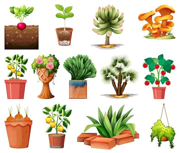 Insieme di diverse piante in vaso isolato
