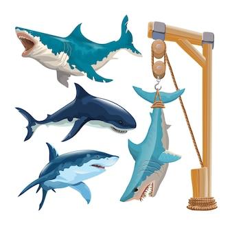 Set di diversi squali nel vettore. diversi squali in movimento e di diversi colori e uno squalo appeso a un gancio