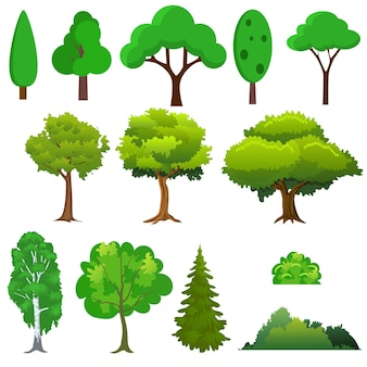 Insieme di alberi diversi. in appartamento