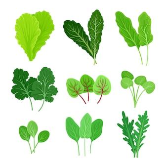 Set di diversi tipi di foglie per insalata