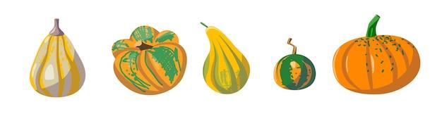 Un insieme di diversi tipi di zucche. zucche gialle e verdi per il menu, design della ricetta dell'insalata vegetariana. illustrazione vettoriale in stile cartone animato