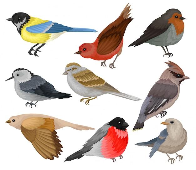 Insieme di diversi uccelli invernali.