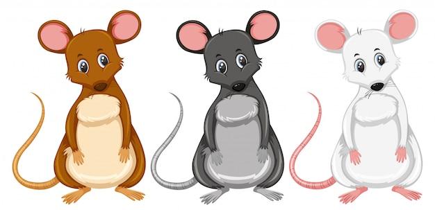 Una serie di ratti di colore diverso