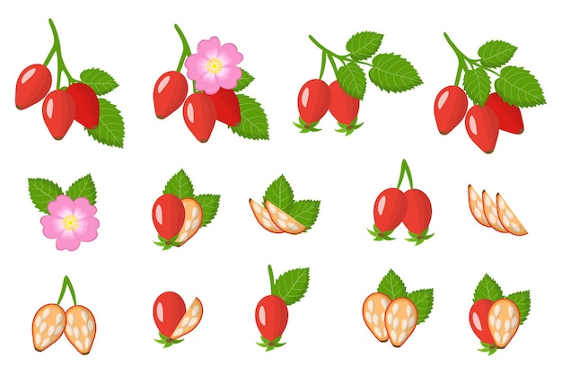 Set di rosa canina frutti esotici isolato su bianco