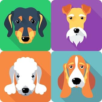 Set cani fox terrier dachshund icona design piatto